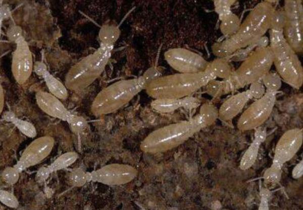 l 39 observatoire national des termites fcba fait peau neuve atrium patrimoine. Black Bedroom Furniture Sets. Home Design Ideas