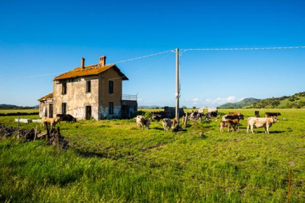 habitat rural
