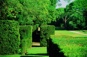 13-Le-labyrinthe-de-buis